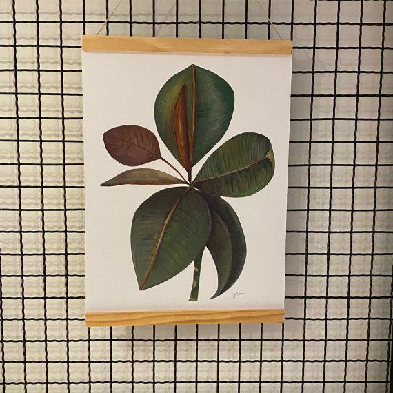 Serie Ficus
